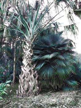 20140116051510-flora25
