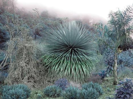 20140116051603-flora27