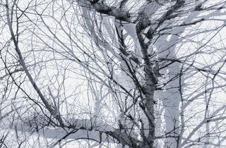 20140125061344-ellenlee_nature_s_cycle_11x15_photo