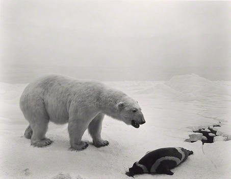 20140131093102-polarbear