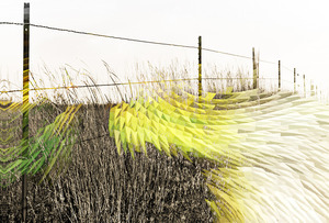 20140131200616-sea_grass15x15_copy