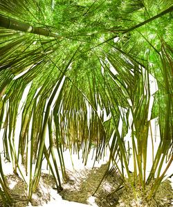 20140201153043-raissa_venables_bamboo_room_2014_jan14