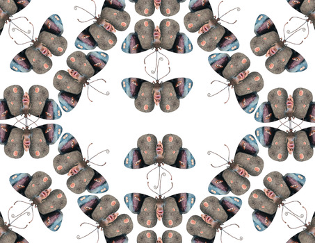 20140201225632-butterfly__2