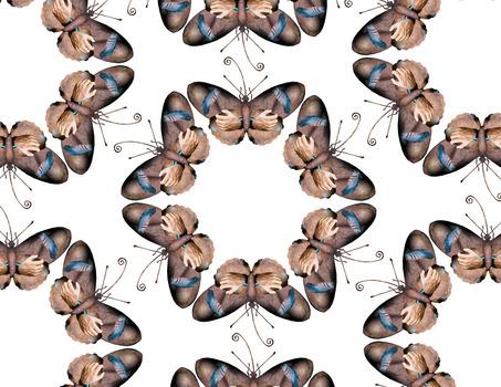 20140201230132-butterfly__4
