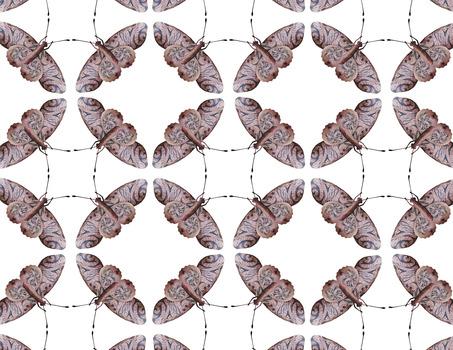20140203015152-butterfly__5