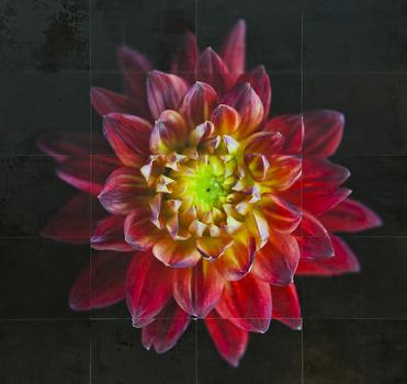 20140203202622-flowerstudy