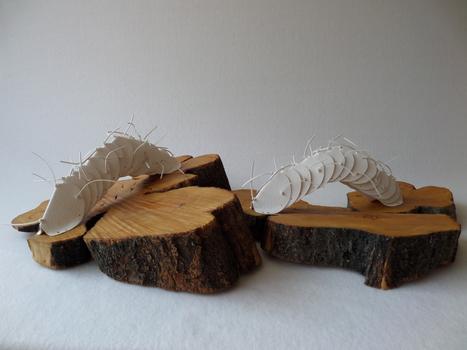 20140214172904-temin_insectos_paper__eucaliptus_wood__series_of_2_6_x_17_x_15