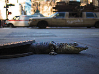 20140217183822-chris_farling-sewer_gator__2011