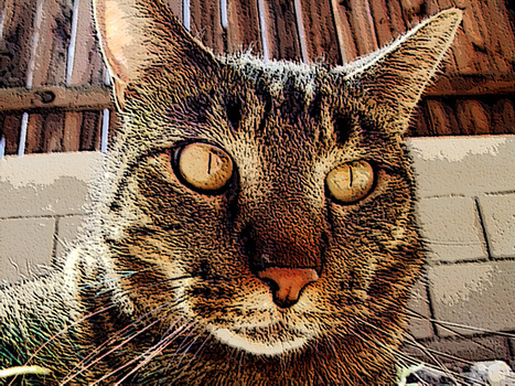 20140218111501-a_very_close-up_shot_of_louie_the_cat