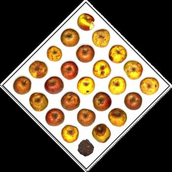 20140218131857-appels12001rweb