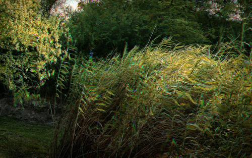 20140220153408-portraitofwind-giantreed