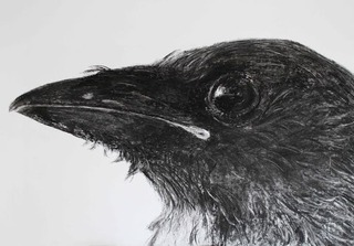 20140220211837-crow_fledgling_charcoal_jill_meager