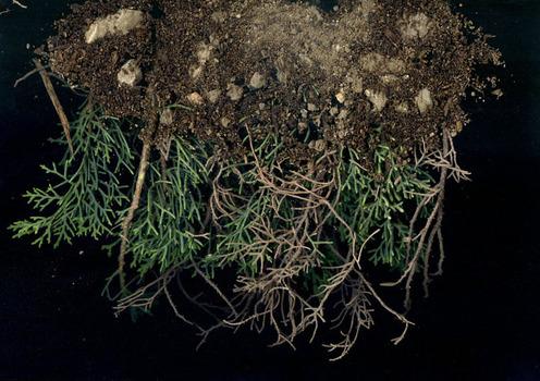 Dirtw