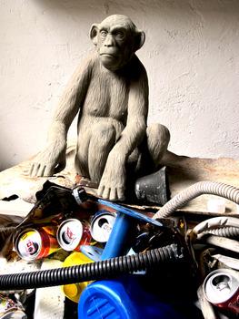 20140304140525-scimmia_1