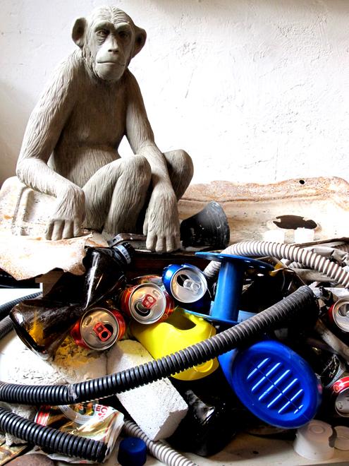 20140304140529-scimmia_2
