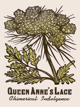 20140314135757-queen_anne_s_lace
