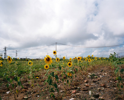20140319223710-sunflower-ishinomaki2012