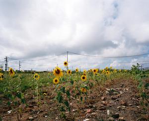 20140319223710-sunflower-ishinomaki2012
