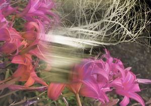 20140325234352-winter_lilies3