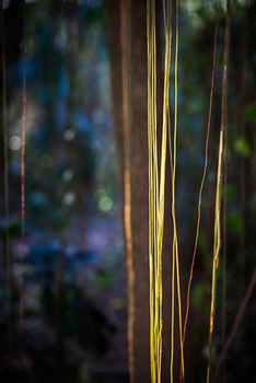 20140331221143-jungle_road_13-01-78_