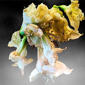 20140416153919-100700gaynor_alan_flowers_2-2-13