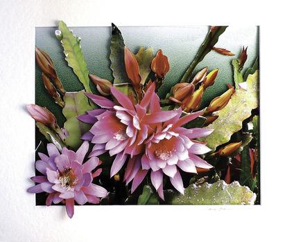 20140418002043-pink_cactus