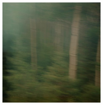 20140428205310-aspen_trees_