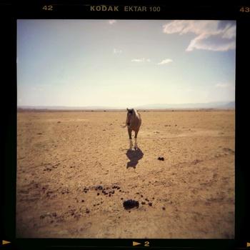 20140428205752-lone_horse_20__x_20_