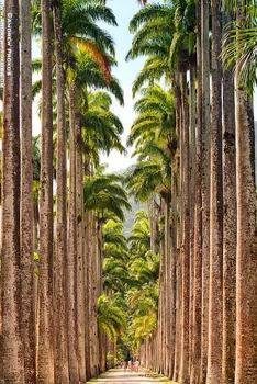 20140503125400-jardim-botanico-palm-trees-rio-1641