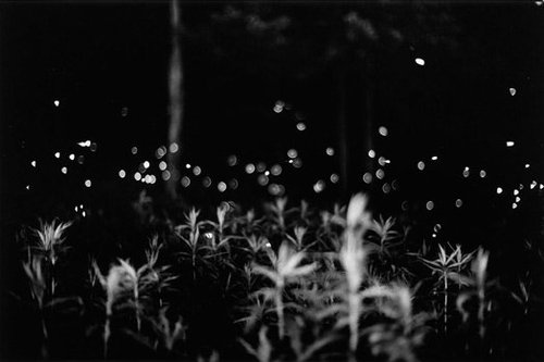 20140506005810-gregory-crewdson-fireflies