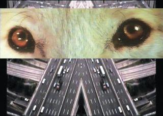 20140512175845-wolf_eyes3