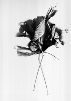 20140519042534-silva-medellin-flowers-1_2013