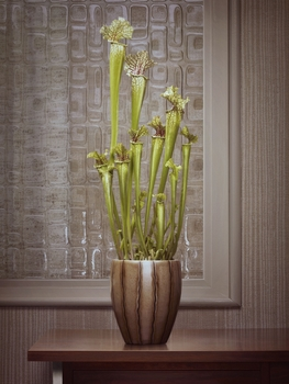 20140606145607-erwin_olaf_fall__still_life_04-548_wagnerpartner