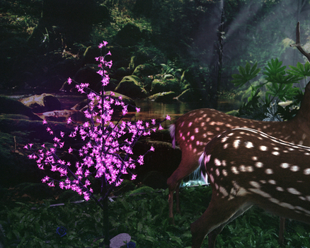 20140610103933-web_zhang-wenxin-deer-forest