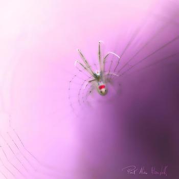 20140616185410-pink_alien_110x110