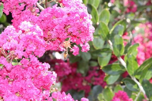 20140617180425-summer_bee