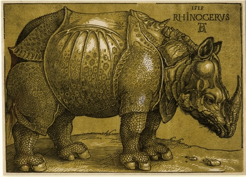 20140625101713-rhino_low_res_24_10_13