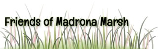 20140704194256-friendsofmadronamarsh-grass