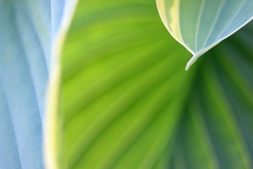 20140706184210-succulent