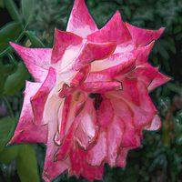 20140718182348-summer_garden