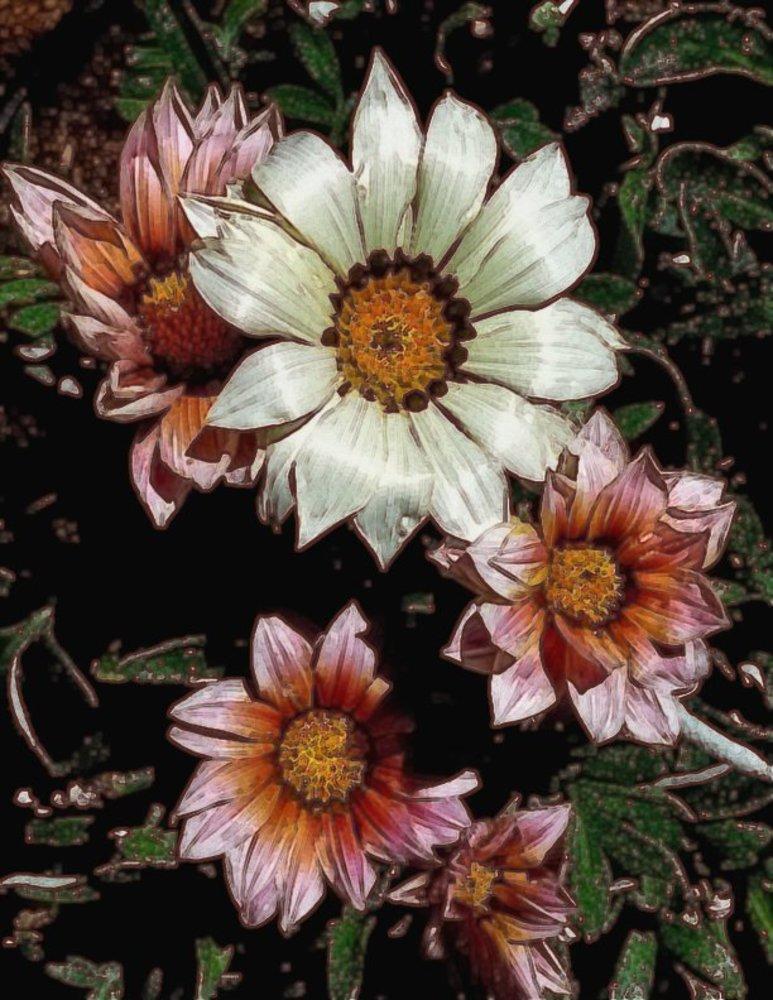 20140718182523-rose_daiseys