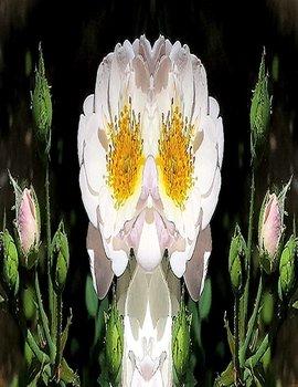 20140718182826-white_rose_altered