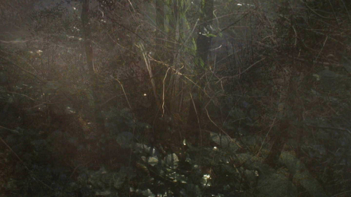 20140723113624-the_secluded_grove_film_still_2