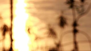 20140815003715-webnoiselife_still_6