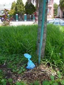 20140817204858-curreri_blueflowers_2014