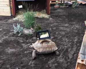 20140828013946-tortoise_1-1024x819