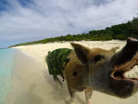 20140924054525-bay_of_pigs1