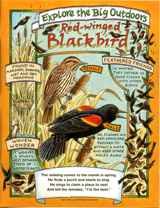 20141001181007-redwing_blackbird_real_page