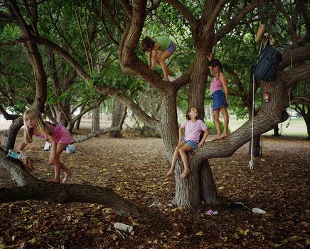 20141015181317-portia_tree
