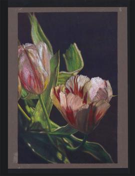 20141025053127-flowers